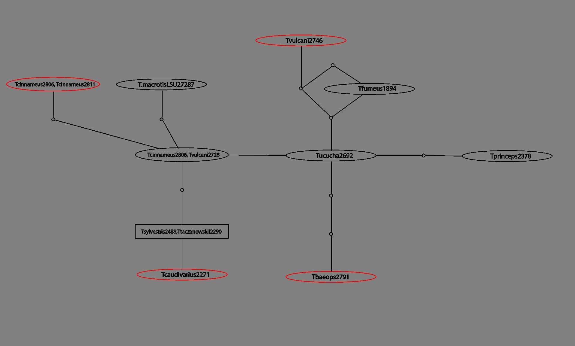 AP5 Network