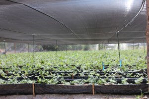 (Plant production at Del Valle)