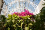 The beautiful Biltmore conservatory!