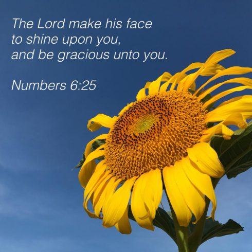 sunflower with bible verse